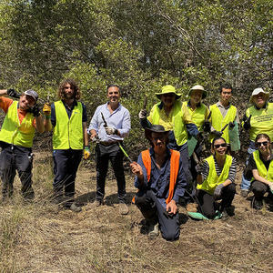 Sporobolus plants have been planted in the Oyster Bay saltmarsh with the help of Conservation Volunteers Australia