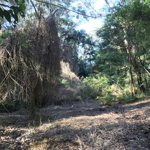 Woody weeds and balloon vine have been removed, native plants smothered by weeds are able to now grow. Additional plants have been  installed to aid native regeneration.