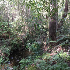Oyster Creek Gully before works commenced