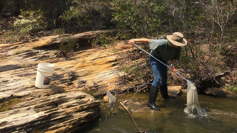 volunteer intern Ingrid Spragg collecting bugs in the upper catchment for River Health monitoring