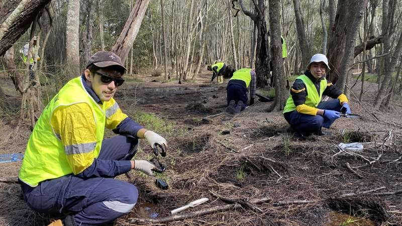 Male and female volunteers wearing hi-vis yellow vests crouch low to the ground planting seedlings