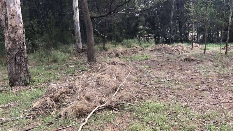 Large areas of land cleared of weeds as part of the Fairfield City Council bush regeneration trial with Georges Riverkeeper