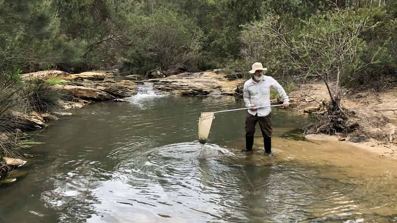Dr. David Reid collecting waterbugs from the Georges River to help monitor river health