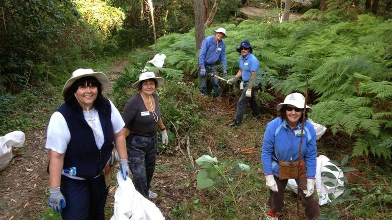 Bushcare group at Oyster Creek Gully