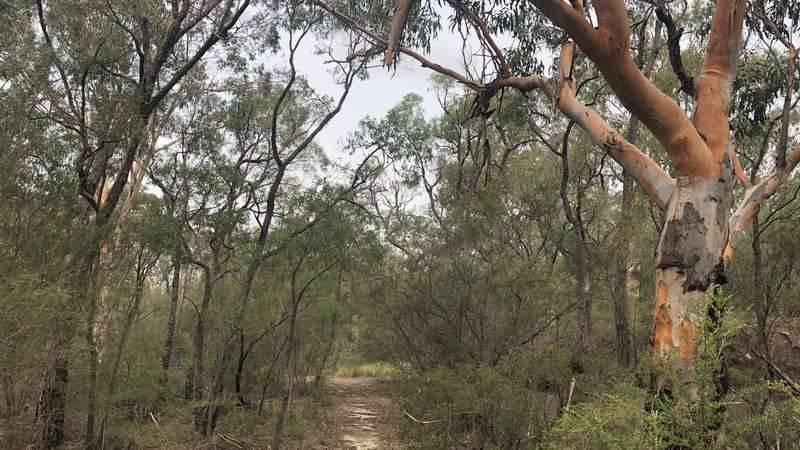 Bushwalking track from Simmos Beach Reserve