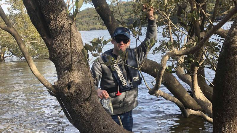 Mangrove researcher from UNSW working to determine if mangroves are an indicator of metal contamination in the Georges River